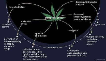 Therapeutic effects of Marijuana - Cannabis - Weed, Asthma, Antiemetic effect, appetite stimulation, analgesia, decreased intraocular pressure, Cancer Cure
