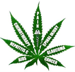 medical-marijuana-news