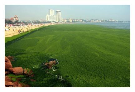 cs algae